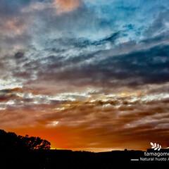 自然観察日記/秋の夜空 秋に暮れゆく夜空  急に冷え込み秋らしく…