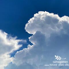 午後の空/自然観察日記/空 午後の空  残暑厳しい昨日の午後の空 青…