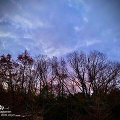 自然観察日記/裏山の木々と空/夕暮れ時の空 夕暮れ時の空  裏山の木々と空です 青に…