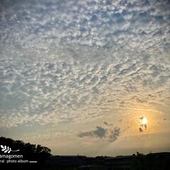 初夏の空/自然観察日記 初夏の空  昨日の午後18時に撮影した西…
