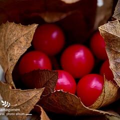 謎の赤い実の植物/植物観察日記 謎の赤い実の植物  毎回、植物観察してい…