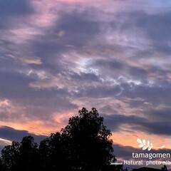 朝焼け空/自然観察日記/空 朝焼け空  今朝の5時27分の空です 本…