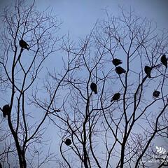 野鳥/自然観察日記 野鳥  まだまだ朝方の冷え込みは厳しいで…