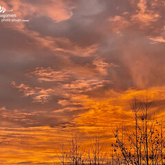 自宅の庭より/朝焼けの空 朝焼けの空  今朝の7時の空です 一瞬で…