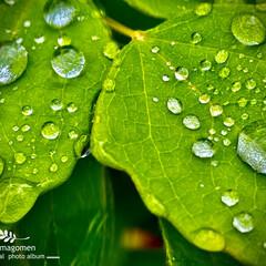 植物観察日記/雨粒 雨粒  昨日の雨粒です キラキラしていて…