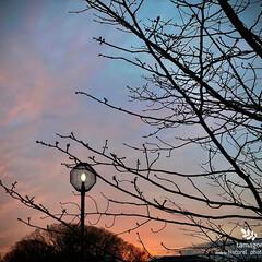 冬の夕暮れ空/自然観察日記 冬の夕暮れ空  自然が織り成す美しい色で…