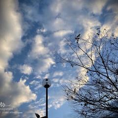 自然観察日記/早朝の空 早朝の空  昨日は朝から近畿地方は雨と霧…