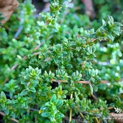 緑の葉/植物観察日記 道路脇に生える半野生化植物なんですが 名…