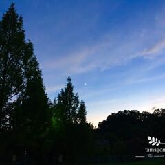 夕暮れの景色/三日月/自然観察/おでかけ/LIMIAおでかけ部/おでかけワンショット 西の空に三日月  メタセコイアとドングリ…