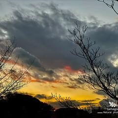 自然観察日記/冬の夕暮れ空と花水木 冬の夕暮れ空と花水木  花水木の紅くなっ…