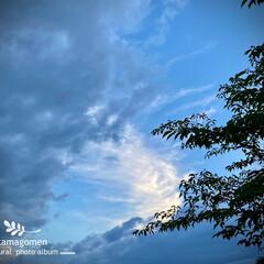雨明けの空/自然観察日記 雨明けの空  昨日の18時48分 東の空…