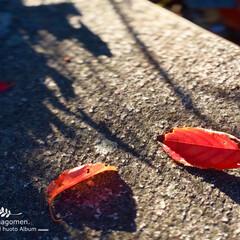 iPhone6s plus/自然観察日記/植物観察日記/落ち葉 落ち葉  階段に落ちた落ち葉です あぁー…