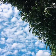 秋空/秋空の下で/団栗林/おでかけ/iPhone6s plus/自然観察日記 団栗林と秋空  秋だというのにまだまだ暑…