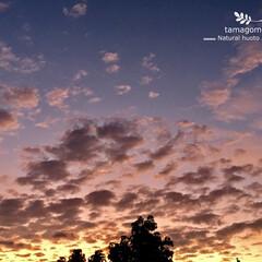夜明け/秋の夜明け/iPhone6s plus/自然観察日記 秋の夜明け  紅葉葉風の遥か上空に 数分…
