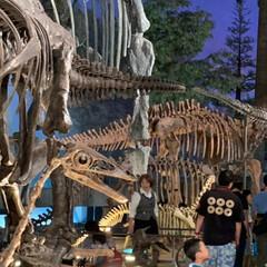 恐竜博物館/おでかけ 相方、孫と一緒に 福井県にある恐竜博物館…(2枚目)