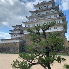 姫路城/お出かけワンショット/おでかけワンショット お城好きの相方について 姫路城に行きまし…(2枚目)