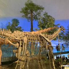 恐竜博物館/おでかけ 相方、孫と一緒に 福井県にある恐竜博物館…(3枚目)