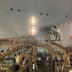 恐竜博物館/おでかけ 相方、孫と一緒に 福井県にある恐竜博物館…(6枚目)