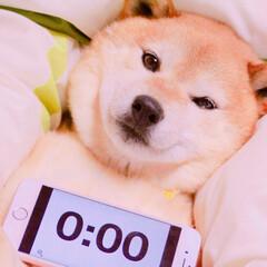ペット/犬/愛犬/柴犬 明けましておめでとうございます🐶🌅 カウ…(1枚目)