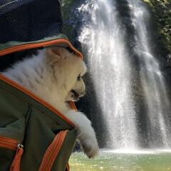 日本滝百選/犬との生活/マイナスイオン/暑さ対策/滝/ポメラニアン/... 涼を求めに行きました。 滝の裏側も見れる…