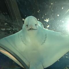 アクアス/バブルリング成功/アシカ親子/水族館が好き/ペンギン/白イルカ/... 久しぶりに水族館へ行きました。 こんなに…(8枚目)