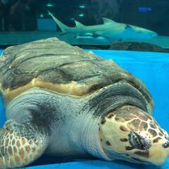 アクアス/バブルリング成功/アシカ親子/水族館が好き/ペンギン/白イルカ/... 久しぶりに水族館へ行きました。 こんなに…(6枚目)