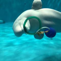 アクアス/バブルリング成功/アシカ親子/水族館が好き/ペンギン/白イルカ/... 久しぶりに水族館へ行きました。 こんなに…(3枚目)