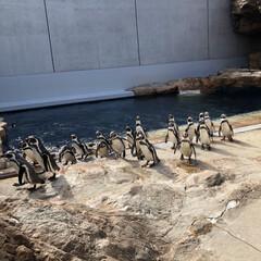 アクアス/バブルリング成功/アシカ親子/水族館が好き/ペンギン/白イルカ/... 久しぶりに水族館へ行きました。 こんなに…(4枚目)