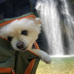 日本滝百選/犬との生活/マイナスイオン/暑さ対策/滝/ポメラニアン/... 涼を求めに行きました。 滝の裏側も見れる…(2枚目)