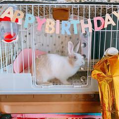 くぅちゃん/ミニウサギ/ウサギ/うさぎ/LIMIAペット同好会/ペット/... くぅちゃん♥️  3/20 くぅちゃんH…(2枚目)