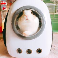 宇宙船キャリー/うさぎ/ウサギ/ミニウサギ/フォロー大歓迎/ペット/... くぅちゃん🐰 いつか月に行けるかな🌙.*…