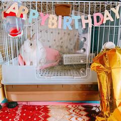 くぅちゃん/ミニウサギ/ウサギ/うさぎ/LIMIAペット同好会/ペット/... くぅちゃん♥️  3/20 くぅちゃんH…(1枚目)