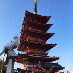 オカメインコ/鳥/100均コスメ 平和を祈る白い鳥