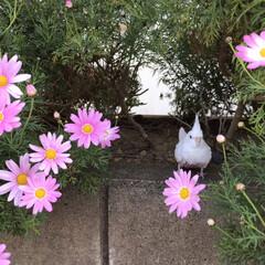桜/ダイソー/セリア 桜散る前に地元散歩😊(5枚目)