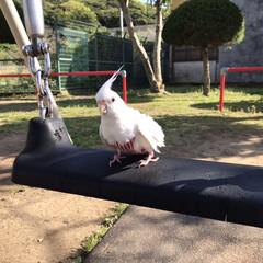 桜/ダイソー/セリア 桜散る前に地元散歩😊(4枚目)