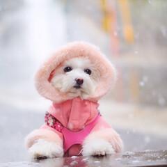 しふぉん/ペット/ミックス犬/フォロー大歓迎/ペット仲間募集/犬/... 今日のしふぉん地方は雪☃︎  雪の中、 …