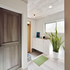 玄関/玄関ホール/天井/ナチュラル/木目/観葉植物/... 天井を含め玄関ホール全体を 白色のナチュ…