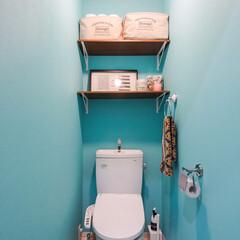 トイレ/壁/色/青系/棚/収納/... トイレの壁は、他の部屋の白系のイメージと…