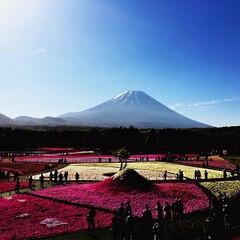 きれい/癒される/ニヤニヤ/過去写真/富士山と芝桜/芝桜/... 数年前の5月の🗻芝桜です❣️ 過去写真を…