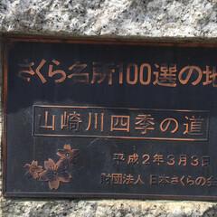 ジョギングコース/桜/夜桜/ライトアップ中止 ライトアップ🌸中止なので昨年のです❗️ …(3枚目)