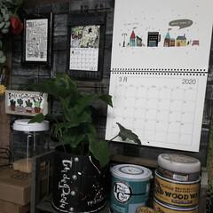 男前インテリア/賃貸インテリア/廃タイヤ利用/廃材リメイク/観葉植物のある暮らし/観葉植物/... 久しぶりに観葉植物を買いました😆  この…