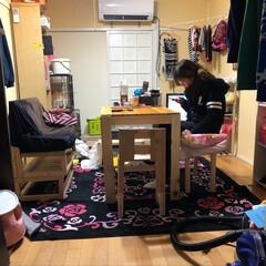 ダイニングテーブルDIY/ペット/ハンドメイド/犬/DIY ダイニングテーブルとイスを制作完了! ガ…