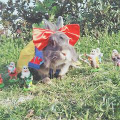 白雪姫/ディズニープリンセス/うさぎ/LIMIAペット同好会/フォロー大歓迎/ペット仲間募集/... 瑠桜姫と七人の小人🍎