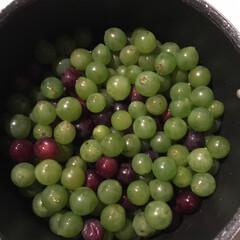 ジュース/ブドウ/ハンドメイド/暮らし/食欲の秋 ブドウをいっぱいもらったけど、食べ切れな…