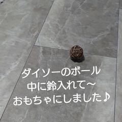 孫/子猫/スモークツリー/廊下/ダイソー/ハンドメイド/... スモークツリー ドライになった子をお飾り…(2枚目)