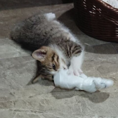 子猫 おはようございます🙇 今日の🐈にゃんこ🐈…(1枚目)