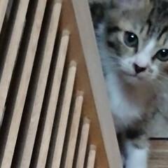 子猫/猫と暮らす/トイレ/セリア/ハンドメイド/雑貨/... こんばんは🙇 アイビー&ユーカリが乾いた…(4枚目)