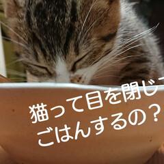 子猫/猫と暮らす/トイレ/セリア/ハンドメイド/雑貨/... こんばんは🙇 アイビー&ユーカリが乾いた…(3枚目)