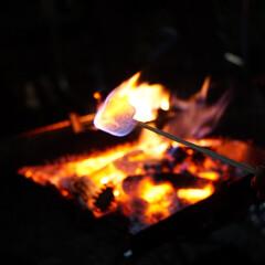 焚き火/マシュマロ/キャンプ/秋/おでかけ キャンプで焚き火をしました! 焚き火と言…