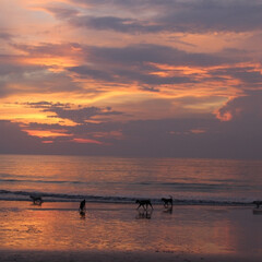 旅行/旅の思い出/夕日/海近/バリ/犬/... バリの海辺で見た夕日🌇 数年前に友人の結…